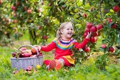 Μήλο επιλογής μικρών κοριτσιών στον κήπο φρούτων Στοκ φωτογραφίες με δικαίωμα ελεύθερης χρήσης