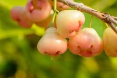 Μήλο κεριών Στοκ εικόνες με δικαίωμα ελεύθερης χρήσης