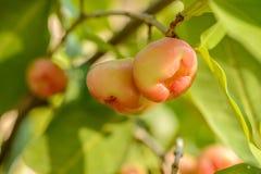 Μήλο κεριών Στοκ εικόνα με δικαίωμα ελεύθερης χρήσης