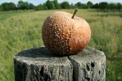 μήλο σάπιο Στοκ Εικόνες