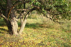 Μήλο το φθινόπωρο Στοκ εικόνες με δικαίωμα ελεύθερης χρήσης