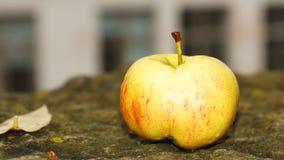 Μήλο φθινοπώρου Στοκ εικόνα με δικαίωμα ελεύθερης χρήσης
