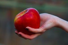 Μήλο φθινοπώρου Στοκ Εικόνες