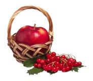 μήλο ώριμο Στοκ φωτογραφίες με δικαίωμα ελεύθερης χρήσης