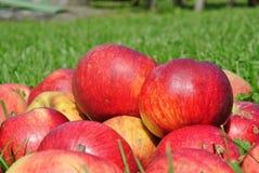 μήλων Κριμαία ίντσα χλόης Αυγούστου πολύ ένα s μικρή Ουκρανία Στοκ Φωτογραφίες