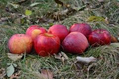 μήλων Κριμαία ίντσα χλόης Αυγούστου πολύ ένα s μικρή Ουκρανία στοκ φωτογραφία με δικαίωμα ελεύθερης χρήσης