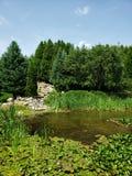 Μίγματα λιμνών με το πράσινο της φύσης στοκ φωτογραφίες