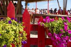 Μίγμα και βασιλικός λουλουδιών στοκ φωτογραφία με δικαίωμα ελεύθερης χρήσης