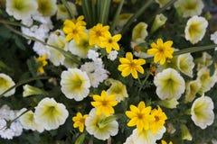 Μίγμα λουλουδιών άνοιξη Στοκ Εικόνες