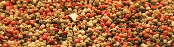 Μίγμα πιπεριών Στοκ Φωτογραφίες