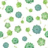 Μίγμα του πράσινου Succulent υποβάθρου σχεδίων εγκαταστάσεων στοκ φωτογραφία με δικαίωμα ελεύθερης χρήσης
