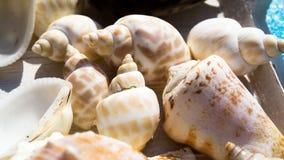 Μίγμα των κοχυλιών και των θαλασσινών κοχυλιών σαλιγκαριών Στοκ Φωτογραφία