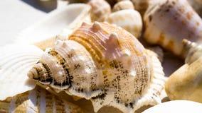 Μίγμα των κοχυλιών και των θαλασσινών κοχυλιών σαλιγκαριών Στοκ Εικόνες