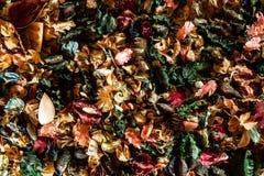 Μίγμα των ξηρών αρωματικών λουλουδιών Στοκ εικόνα με δικαίωμα ελεύθερης χρήσης