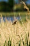 Μίγμα των πουλιών Στοκ Εικόνες