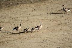 Μίγμα των πουλιών Στοκ εικόνα με δικαίωμα ελεύθερης χρήσης