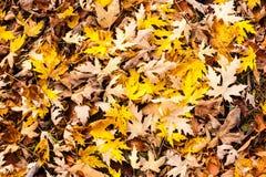 Μίγμα των φύλλων φθινοπώρου στο έδαφος Στοκ Φωτογραφία
