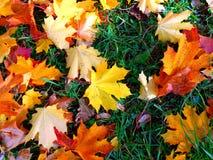 Μίγμα φθινοπώρου φύλλων στην πράσινη χλόη στοκ εικόνα