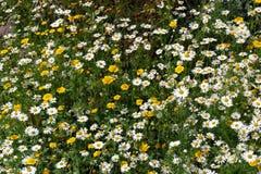 Μίγμα Wildflowers Στοκ Εικόνα