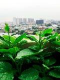Μίνι αγρόκτημα κήπων λαχανικών στη στέγη στην αστική πόλη Στοκ εικόνα με δικαίωμα ελεύθερης χρήσης