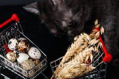 Μίνι κάρρο τροφίμων με τα τρόφιμα στοκ εικόνες