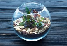 Μίνι κήπος στο βάζο γυαλιού στο ξύλινο υπόβαθρο Στοκ Φωτογραφία