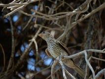 Μίνι πουλί στοκ εικόνες με δικαίωμα ελεύθερης χρήσης