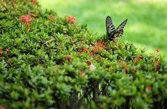 Μίξη πεταλούδων Στοκ εικόνες με δικαίωμα ελεύθερης χρήσης