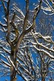 Μίσχοι δέντρων με το χιόνι Στοκ φωτογραφία με δικαίωμα ελεύθερης χρήσης