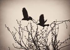 Μίσχοι και γερανοί σε μια φωλιά κοντά σε Σαραγόσα Στοκ Εικόνα