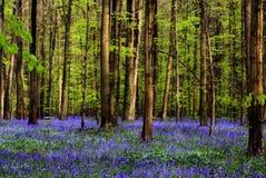 μίσχοι μπλε Στοκ εικόνα με δικαίωμα ελεύθερης χρήσης