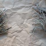 Μίσχοι Succulents των εγκαταστάσεων στο υπόβαθρο του παλαιού τσαλακωμένου εγγράφου υπόβαθρο, διάστημα Στοκ Φωτογραφίες