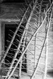 Μίσχος για να ξεράνει τα σταφύλια στον ήλιο Στοκ Εικόνες