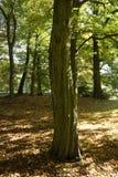 Μίσχος ενός μεγάλου δέντρου σε ένα πάρκο Στοκ Εικόνες