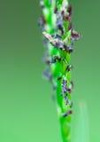 μίσχος φυτών Στοκ Φωτογραφία