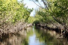 Μαγγρόβια σε χιλιάες νησιά στοκ φωτογραφία με δικαίωμα ελεύθερης χρήσης
