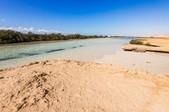 Μαγγρόβια στο εθνικό πάρκο Ras Μωάμεθ στοκ εικόνα