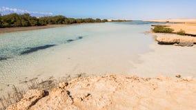 Μαγγρόβια στο εθνικό πάρκο Ras Μωάμεθ στοκ εικόνες