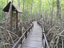 Μαγγρόβιο πιό reforest Στοκ εικόνες με δικαίωμα ελεύθερης χρήσης