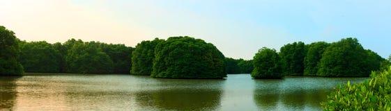 Μαγγρόβιο πιό reforest Στοκ Φωτογραφίες