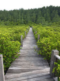 Μαγγρόβιο πιό reforest Στοκ Εικόνες