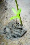 Μαγγρόβιο που φυτεύει στον υγρότοπο της Ασίας Στοκ φωτογραφίες με δικαίωμα ελεύθερης χρήσης