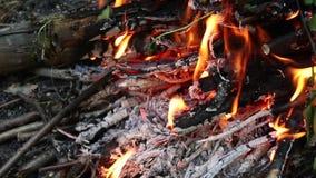 Μαγείρεμα στην πυρκαγιά Πικ-νίκ Μεγάλη φωτιά στη φύση απόθεμα βίντεο