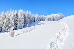 Μαγικά δέντρα που καλύπτονται με το άσπρο χιόνι Στοκ Εικόνα