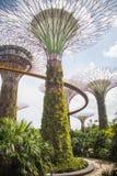 Μαγικά δέντρα της Σιγκαπούρης Στοκ Φωτογραφίες