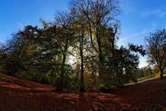 μαγικά δέντρα δέντρων Στοκ Εικόνες