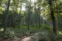 Μαγικά ξύλα Στοκ Εικόνες