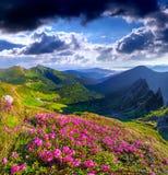 Μαγικά ρόδινα rhododendron λουλούδια στοκ εικόνα