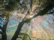 Μαγικά χρυσά βράδια με την άποψη θάλασσας στοκ φωτογραφία με δικαίωμα ελεύθερης χρήσης