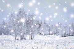Μαγικά snowflakes στο χειμερινό δάσος με τα χιονώδη δέντρα Χειμώνας backg Στοκ Φωτογραφία